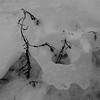 glace et végétal (mimu_13) Tags: europe no nor norvège norway troms tromsfylke tromso tromsø givre glace hiver météo météorologie saisons vinter winter samsungnx nx500 carré square noiretblanc noirblanc blackwhite blackandwhite