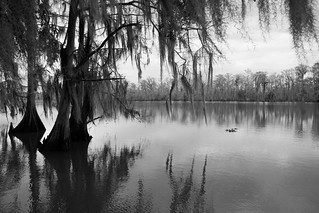 Cypress trees and Spanish Moss - Tchefuncte River, Louisiana - Explore!