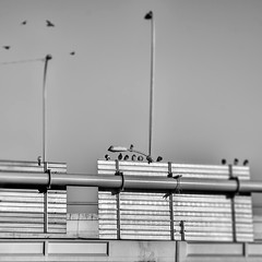 Over The Overpass (Mister Day) Tags: highway pigeons lookup metal overpass