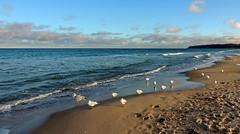 nix los .. (Wunderlich, Olga) Tags: ostsee baabe mönchgut sand strand möwen himmel spuren spiegelung natur landschaft rügen inselrügen