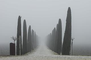 Svanire Nella Nebbia