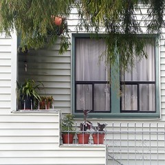 natural fringe (msdonnalee) Tags: house window tree pottedplant terracottapot branches leaves haus home maison casa dom curtain cortina facade facciate façade fachada fassade dwwg