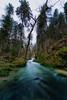 Et au milieu coule une rivière (RémyBochu) Tags: foret eau rivière arbres matin sauvage nature france franchecomté