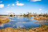 Orlando Wetlands (J. Parker Natural Florida Photographer) Tags: orlandowetlands wetland marsh swamp lake pond water hiking trail orlando centralflorida scenic bluesky palmtree color vsco vscofilm nature