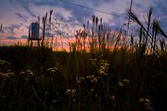 Sunset Nature (Ruan Richard Photography) Tags: flickraward sunset nature heeybooy amazing awesome flowers sky photography ruanrichardphotography
