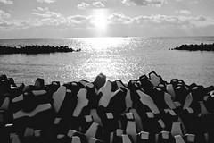 A glory of light (shou yokoya) Tags: film 135 35mm monochrome analogue bw bessat voigtlănder nokton classic 40㎜ f14 kodak trix 400tx pro ship sun