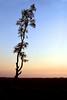 Nature Beauty (Kamruzzaman Masud) Tags: beautyofnature fantasticnature nature chittagoagbangladesh seabeach bangladesh tree alone ngc nationalgeography framebangladesh সাগরপাড় চট্রগ্রাম বাংলাদেশ প্রকৃতি একাকী গাছ ২০১৮ sundaylights
