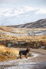 Beinn na Caillich (Màrtainn) Tags: anteileansgitheanach isleofskye skye alba scotland eileansgitheanach schottland ecosse шотландия skotlanti skottland szkocja scozia escocia broskos escòcia skotland schotland σκωτία skócia albain escócia scoţia iskoçya alban highlands gàidhealtachd alltanavaig dougal labradoodle cù dog hund chien pes hond koer koira σκύλοσ kutya hundur anjing cane suns šuo pies cão câine собака perro kopek beinnnacaillich
