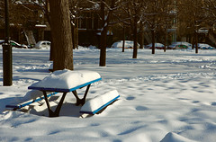 Park Bench in Snow_7969 (David Basiove) Tags: parc park real bench montreal quebec canada cold winter parkbench