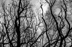 entanglement (ErrorByPixel) Tags: bw black white bnw monochrome errorbypixel pentaxk5 pentax k5 sky cloud tree branch nature contrast smc pentaxda l 1855mm f3556 al smcpentaxdal1855mmf3556al forest