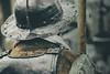 17th Century English Soldier (Lauren Taliana) Tags: 17thcentury reenactors atmospheric costume armour soldier helmet elements flickr nikkor nikon kingcharlesi charlesi historical history old reenactor london england english