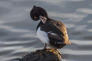 Quack.......