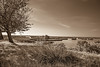 Salt Marsh Sepia (Mike Schaffner) Tags: bw blackwhite blackandwhite coastal estuary grass marsh marshland monochrome morning oquinnestuary saltmarsh sepia wetlands hitchcock texas unitedstates us