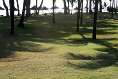 mauritius grassy afternoon (kexi) Tags: mauritius ilemaurice africa grass green light umbrellas afternoon palms vacation canon october 2016 shadows instantfave glow