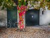 IMG_0171rid (FrankDepa) Tags: campagna country colline viti vitigni verde bici biciclette alberi bicycle