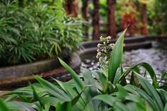 The color of Zeiss Planar (Xiaole wy & JV William) Tags: canon eos 7d zeiss planar 50mm f14 t ze color outdoor photography plant flowers fountain water the secret garden roof top equator weather rainy afternoon monsoon season smooth silky bokeh