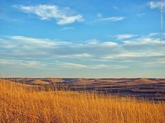 Konza Prairie, 10 Feb 2017 (photography.by.ROEVER) Tags: kansas rileycounty prairie tallgrassprairie konzaprairie nature naturetrail flinthills bluesky blueskies grasslands landscape afternoon february 2017 february2017 usa