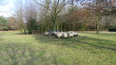 Klompenpad-Norderpad (Cor D.) Tags: klompenpad norderpad putten nederland netherlands gelderland kerryhillschapen kerryhill