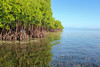 Mangroves and seagrasses (blue.forests) Tags: seagrass mangroves indonesia lembongan blue forests aerial roots mangrove habitat ecosystem coastal fieldwork boat mud crabs beach