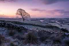 Early Doors (JamesPicture) Tags: peakdistrict roaches staffordshire the ice sky tree kase