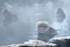_MG_0129 (Nekogao) Tags: 日本 長野県 山ノ内町 中部地方 地獄谷野猿公苑 日本猿 サル 猿 温泉 冬 japan nagano naganoprefecture yamanouchi chubu jigokudanimonkeypark snowmonkeys snowmonkey monkey monkeys onsen hotspring macaque japanesemacaque bathing winter