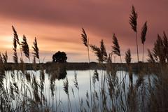 Pink mood (Sonia TGE) Tags: nature sunset pink plants naturelovers nikon nikonphotography d3300