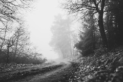 Foggy Fairytale Forest