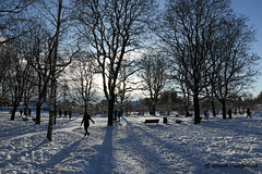 A day in the park (K. Haagestad) Tags: frognerparken oslo winter park snow frost trees people light shadows