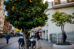 Avenida de la Constitución (J_M_Photo) Tags: people streetphotography street streetstyle streetshot bestofday citystreets city citylife plaza tree kid beautiful andalucia colours españa sevilla gente family picoftheday nikon workout mother worldplaces photo photooftheday photography places paseo spain 4tographie