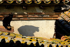 L'ombre d'un chat (jpto_55) Tags: chat chatnoir toiture ombre xe1 fuji fujifilm fujixf55200mmf3548rlmois hautegaronne france