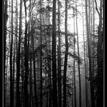Magischer Wald thumbnail