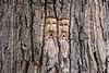 Tree spirits (Jessie T*) Tags: tree carving riverstrail kamloopsbc wood cans2s