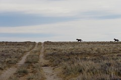 Meet you at the crossroads (prairiegirrl) Tags: wildhorses mustangs stewartcreek wyoming keepwildhorseswild