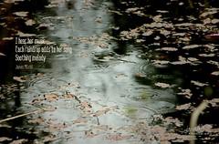 Daily Haiku: Melody (James Milstid) Tags: dailyhaiku haiku haiga poetry jemhaiku raindrops serene