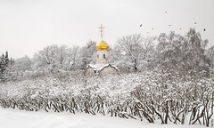 RUS65899(Winter Time. #3) (rusTsky) Tags: winter snow cold wintery church architecture old building raven forest art yellow gold white beauty tree shrub landscape vintage canon eos5d moscow abigfave москва зима orthodoxy outdoor