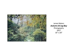 """Autumn At Jug Bay • <a style=""""font-size:0.8em;"""" href=""""https://www.flickr.com/photos/124378531@N04/39408440794/"""" target=""""_blank"""">View on Flickr</a>"""