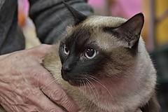 gatti.agr18 (5) (Guido.C.) Tags: gatti cat