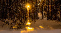 Gold for everyone in my forest (evakongshavn) Tags: goldenscape golden snow winter forest wald foret landscape landschaft paysage hivernal hiver sunset thegoldencircle serenity serene