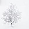 White tree! (Thea Teijgeler) Tags: sneeuw snow sauerland landschap