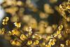 20180120-IMG_2531 (nut_cookie) Tags: flower flowers macrophotography nature tree floral bloom ume plum plumflower plumblossom
