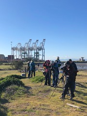 Birding at the Port (Melinda Young Stuart) Tags: birdwatching birders cranes industry shipping containers port portofoakland shore bay westcoast giant steel construction people hobby tripods scopes nature audubon ggas middleharbor park dunes spottingscope goldengateaudubon oakland