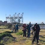Birding at the Port thumbnail
