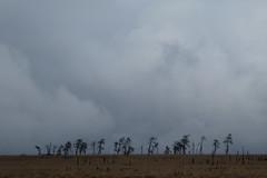 Hoge Venen (Hautes Fagnes) Belgium (polletjes) Tags: hoge venen hautes fagnes belgium belgie bomen trees baume asbres wolken clouds sky blue silhouettes landschap landscape natuur nature weer weather