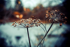 MDD_8468 (Dmitry Mahahurov) Tags: nikon d300 mahahurov tosno