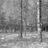 Winter/Delta400/Arax (Jonas.Nilsson) Tags: winter arax60mlu carlzeissjena biometar 12028 ilford ilfordfilm delta400 d76 filmphotography film filmisnotdead mediumformat mf monochrome blackandwhite bw believeinfilm iamfilm sweden värmland rural