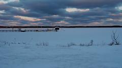 Frozen sea! (mpersson60) Tags: sverige sweden gotland fårösund hamn harbour hav sea snö snow is ice