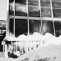 Les premières dents de l'hiver tombent une par une... (woltarise) Tags: montréal botanique jardin serres glace froid hiver rosemont ricohgr