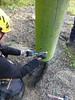 #Maintenance and inspections of adventure parks and High-ropes courses #15567 #safety http://j.mp/2AG2VIA (Skywalker Adventure Builders) Tags: high ropes course zipline zipwire construction design klimpark klimbos hochseilgarten waldseilpark skywalker