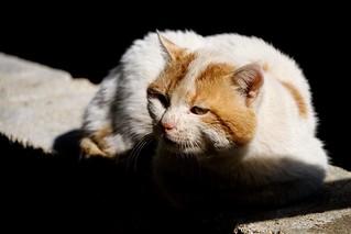 #catlovers #photooftheday #photo_art #photography #photo #photographyoftheday #pic #capture #pets