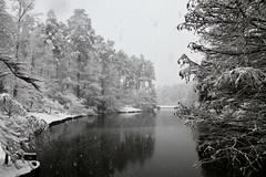 Duke Snow Day 1 (akintsy_photo) Tags: duke university snow south landscape winter garden park